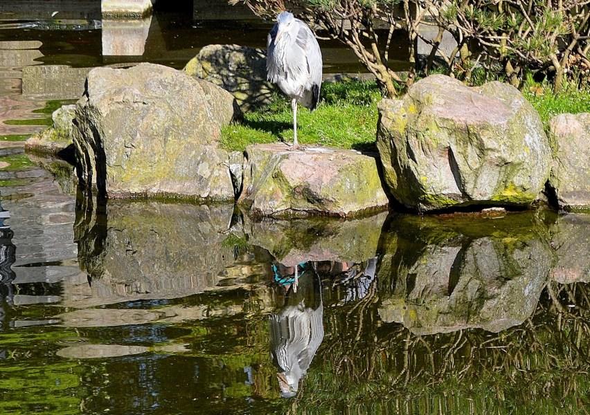 Kyoto Park Heron