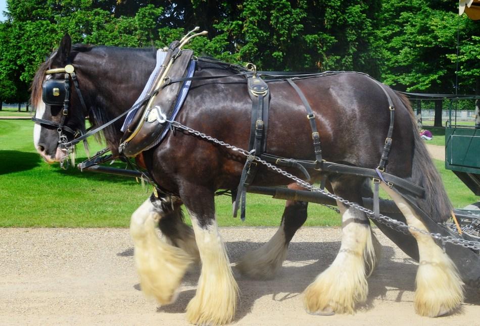 Horses - Hampton Court