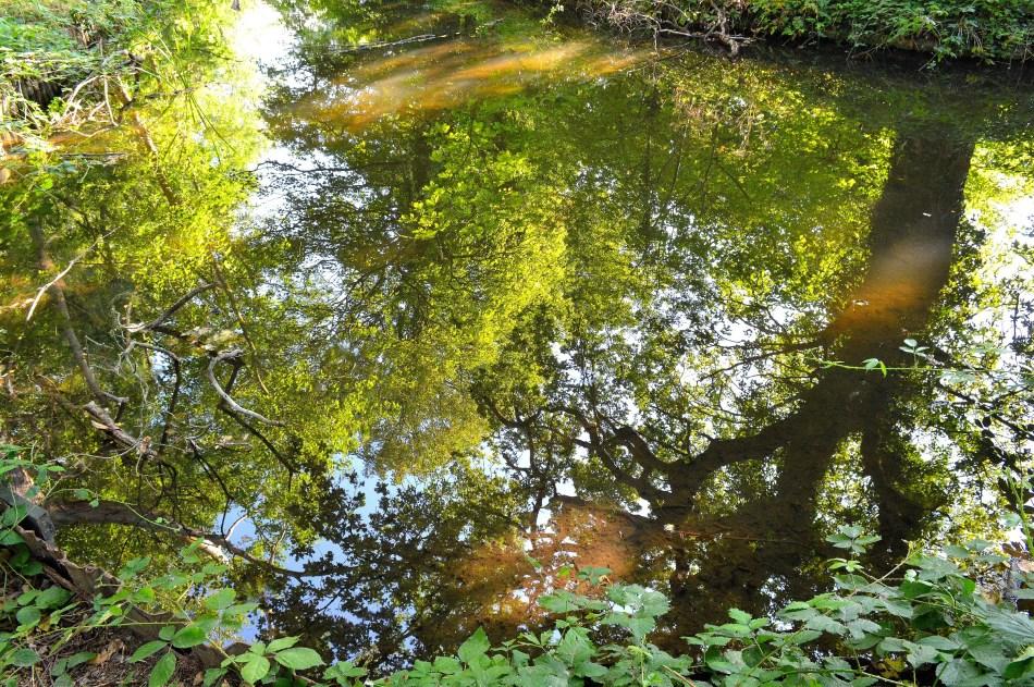 Bushy Park River 1