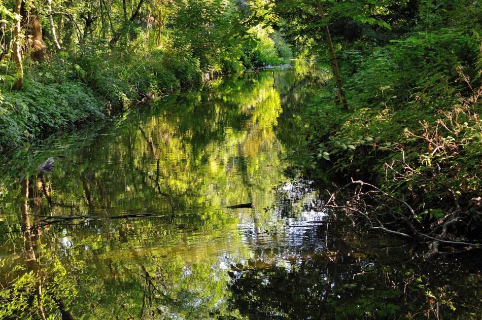 Bushy Park River 2