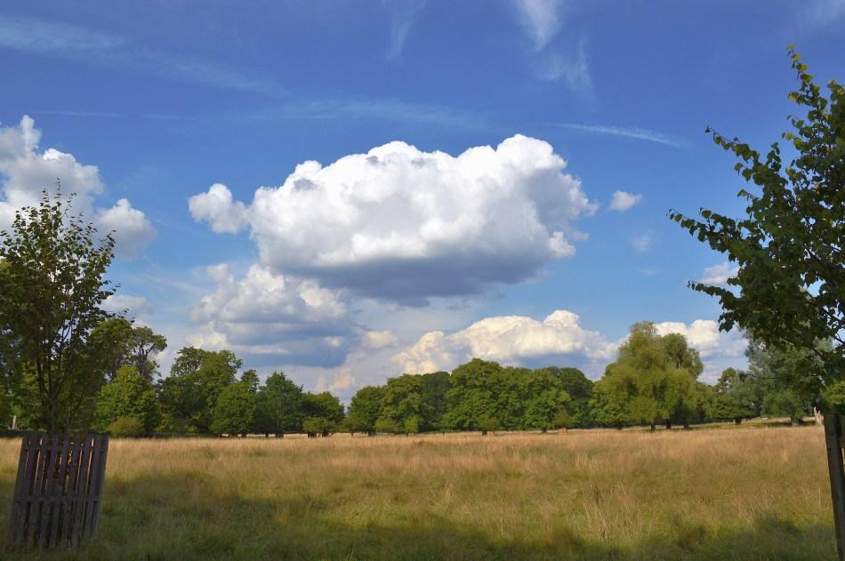 Bushy Park Sky