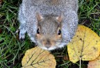 Squirrel- cropped 2