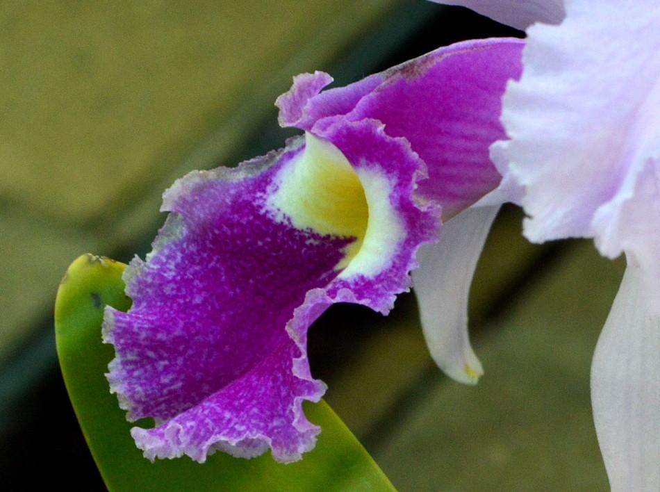 Kew Gardens Orchids