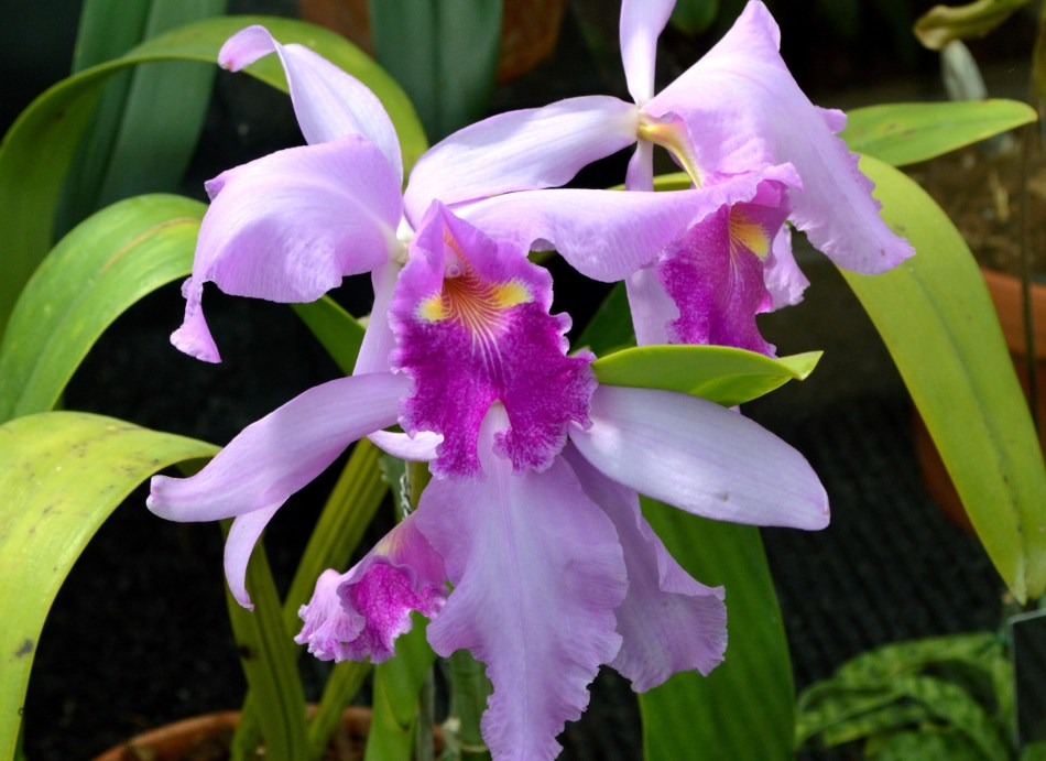 Kew Gardens Orchid 3