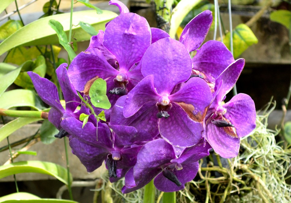 Kew Gardens Orchid 2