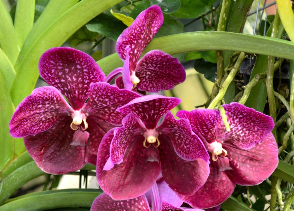 Kew Gardens Orchid 1