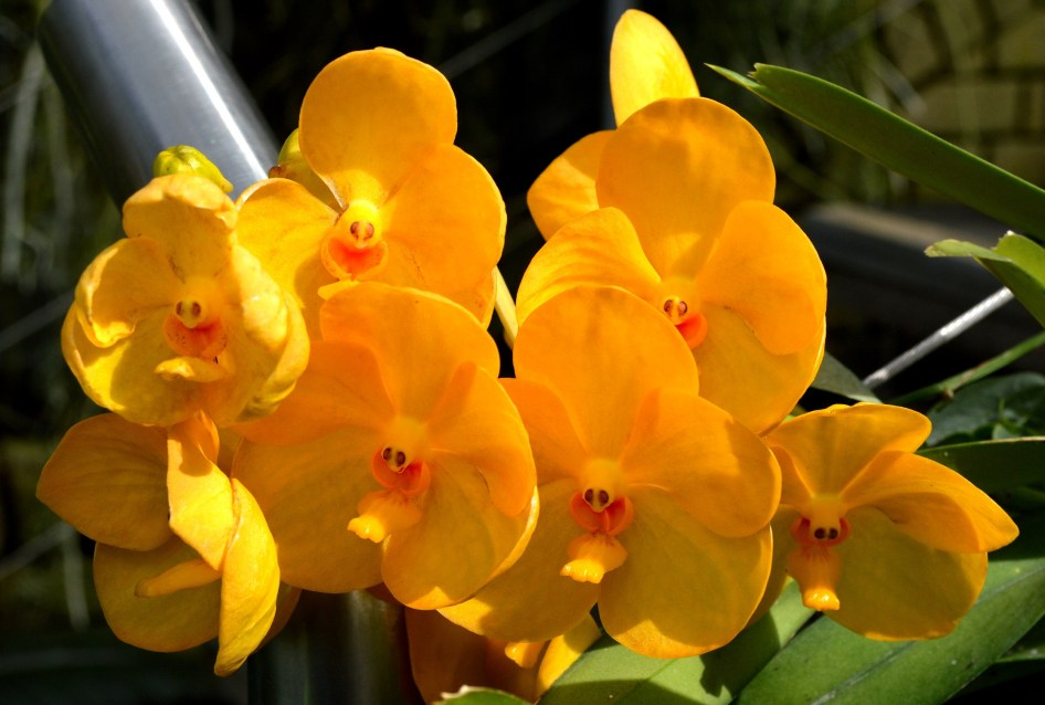 Kew Orchids
