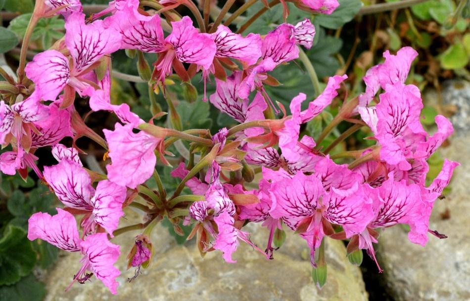 Kew Gardesn Flowers