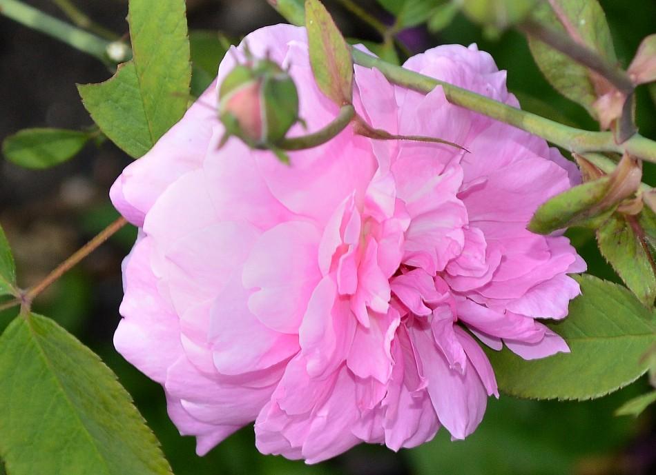 Kew Gardens Flower
