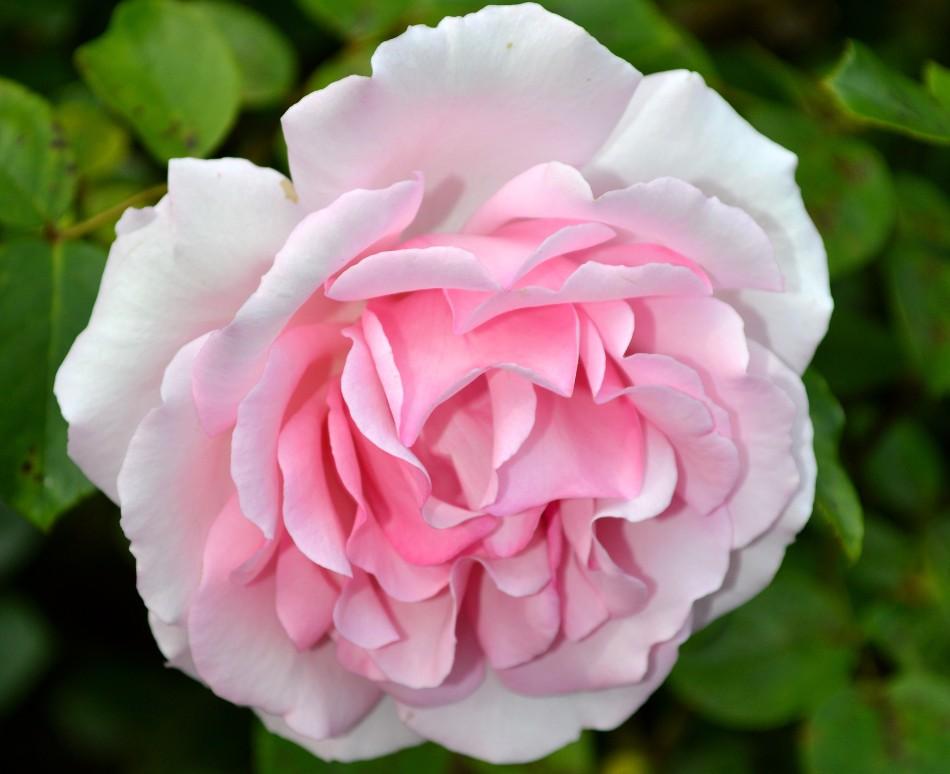 Kew Gardens Flower 2