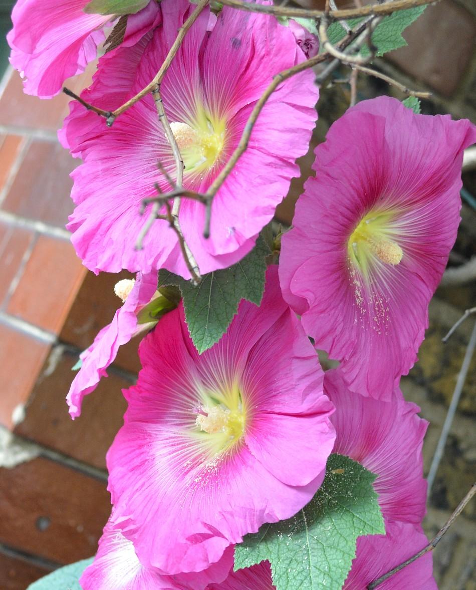Kew Gardens Flower DSC_2024