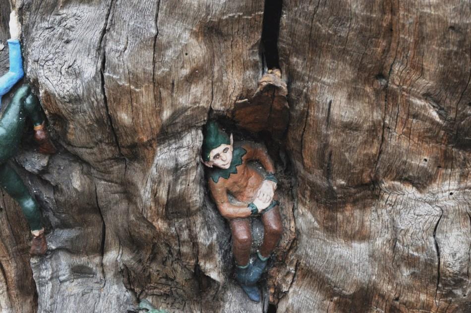 Elfin Oak 2