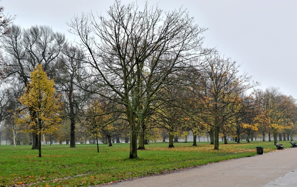 Kensington Gardens - Autumn