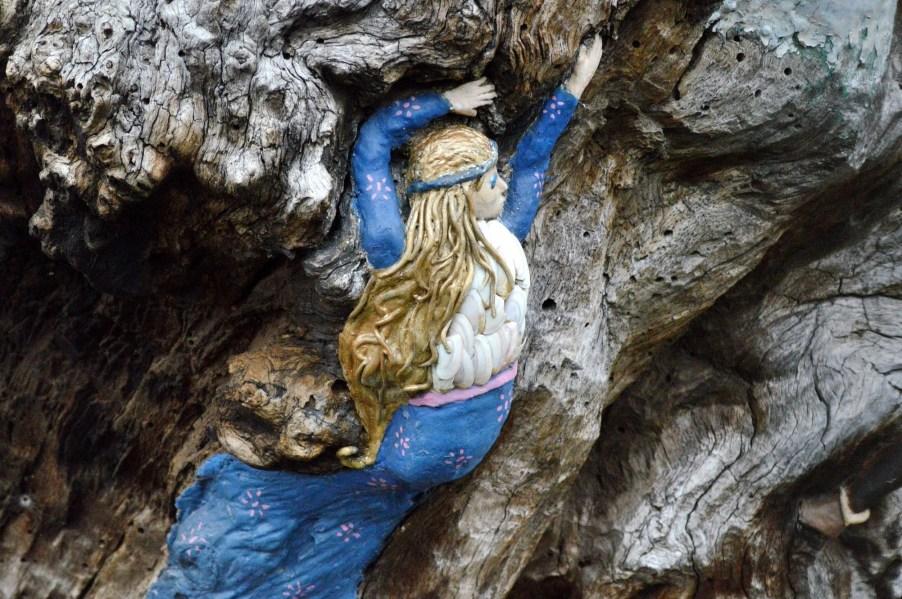 Elfin Oak 6