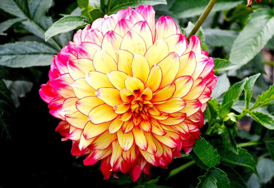 flower-horniman-museum-res-2