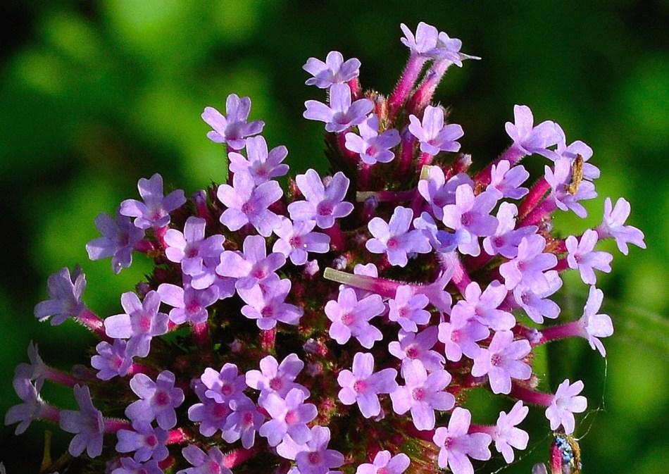 Kensington Garden Flower 1