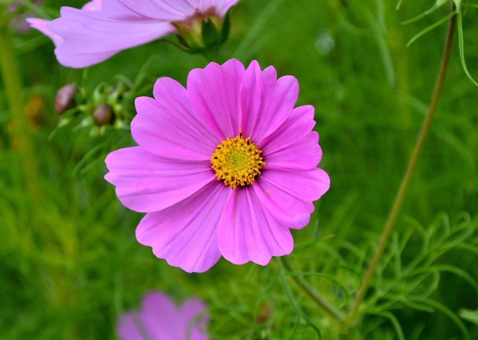 Kensington Garden Flower 3