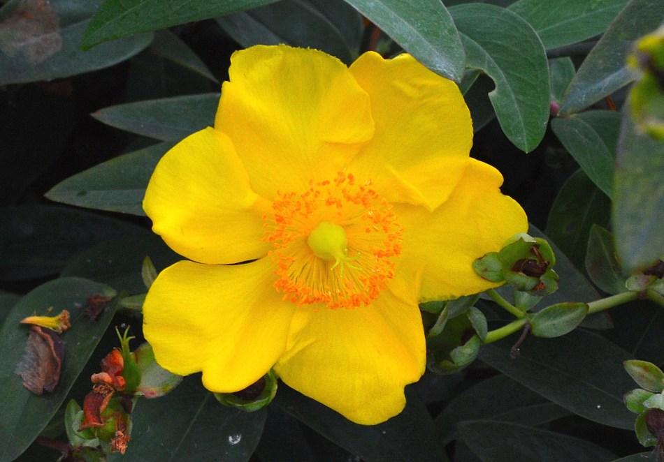 Kensington Garden Flower 4