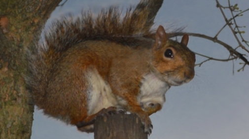 Squirrel on Post 9