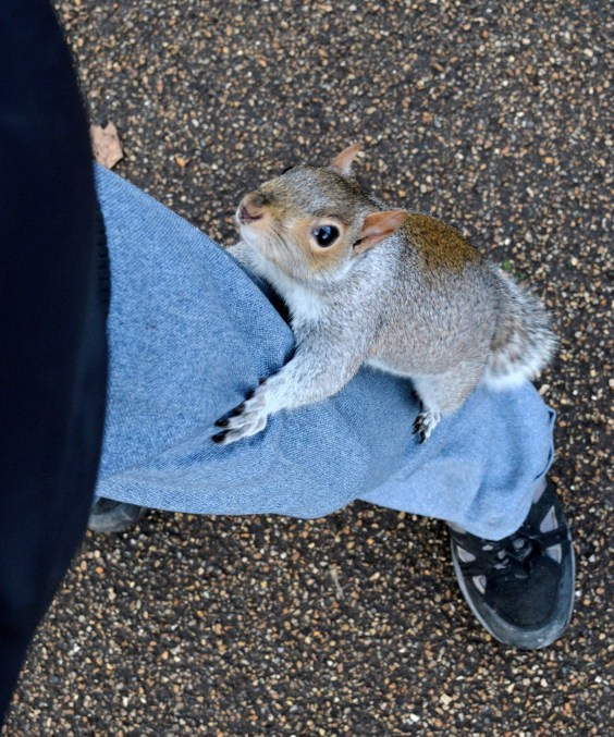 Squirrel up Leg