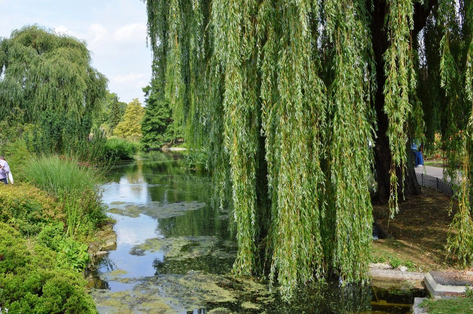 Queen Mary's Gardens - Weeping Wilow