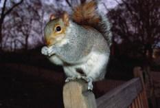 Squirrel by Flash
