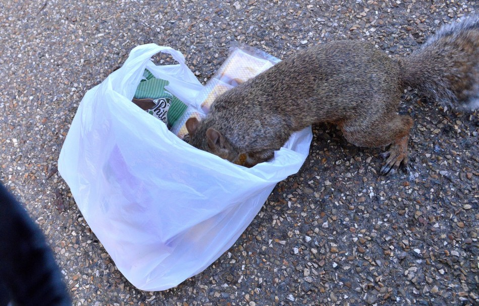 Squirrel in Bag