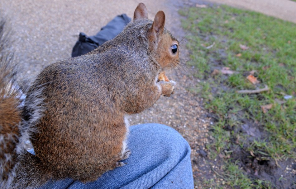 Squirrel on Knee