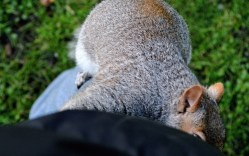 Squirrel up Leg