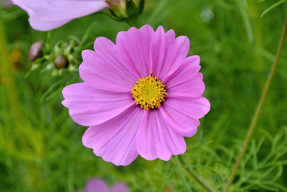 Horniman Flowers 02