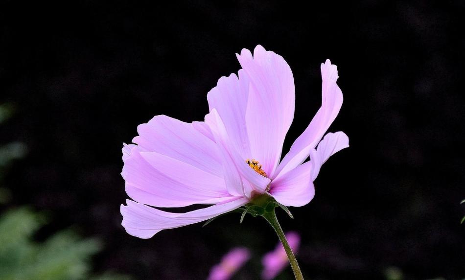Horniman Flowers 03