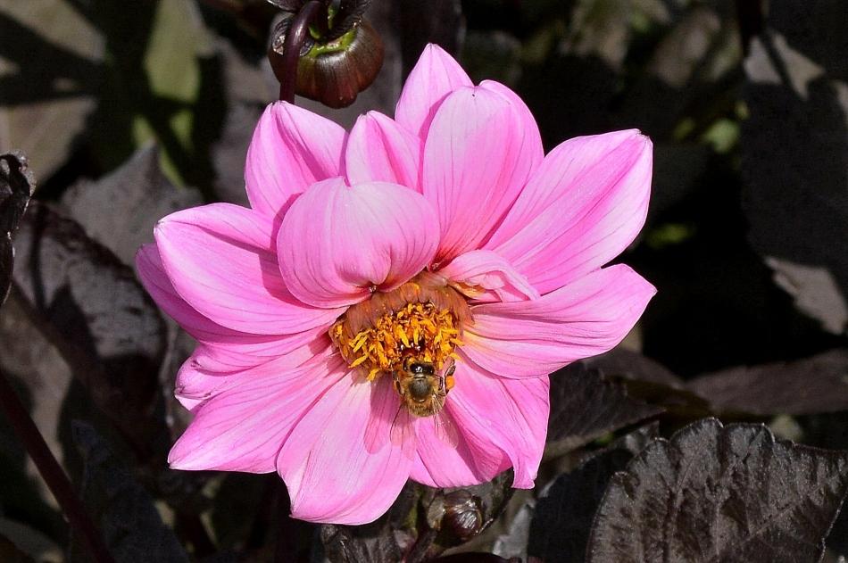 Horniman Flowers 04
