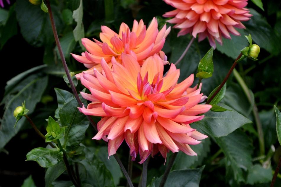 Horniman Flowers 07