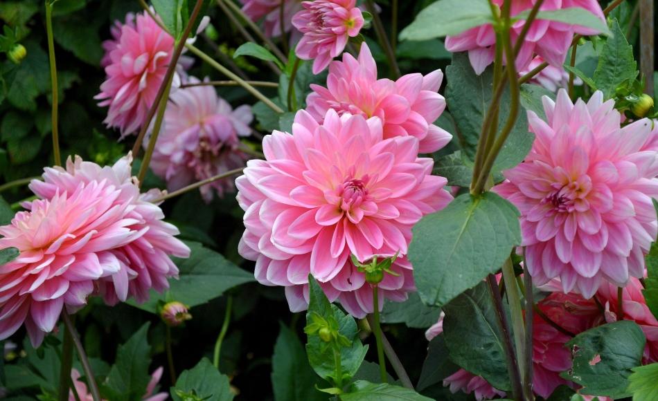 Horniman Flowers 08