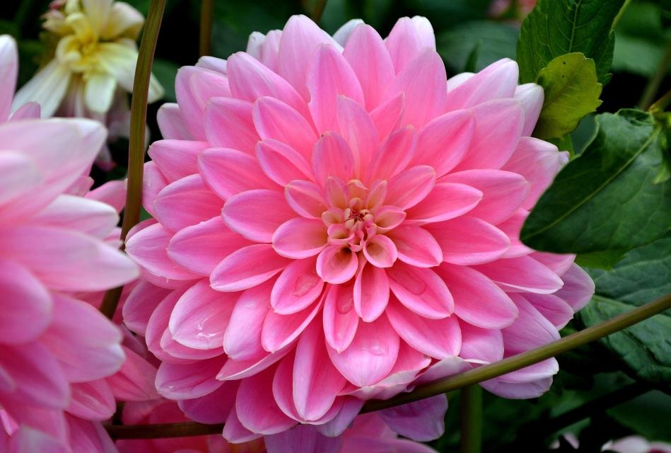 Horniman Flowers 09