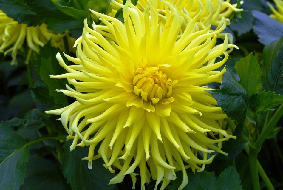 Horniman Flowers 10