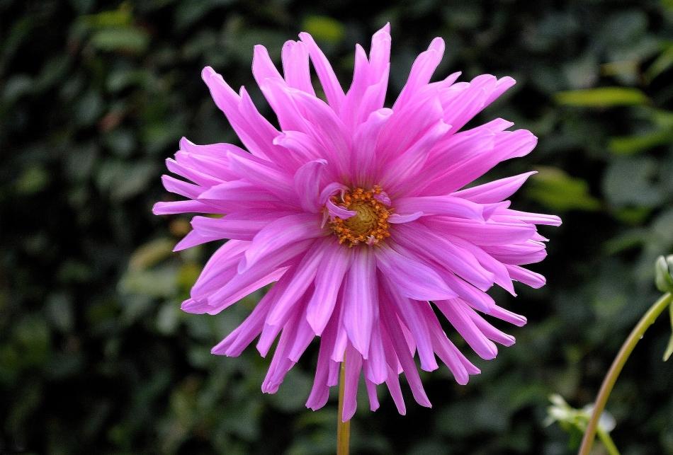Horniman Flowers 11