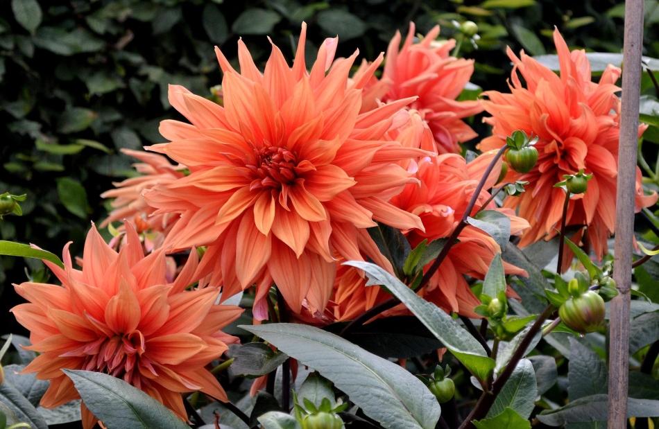 Horniman Flowers 12