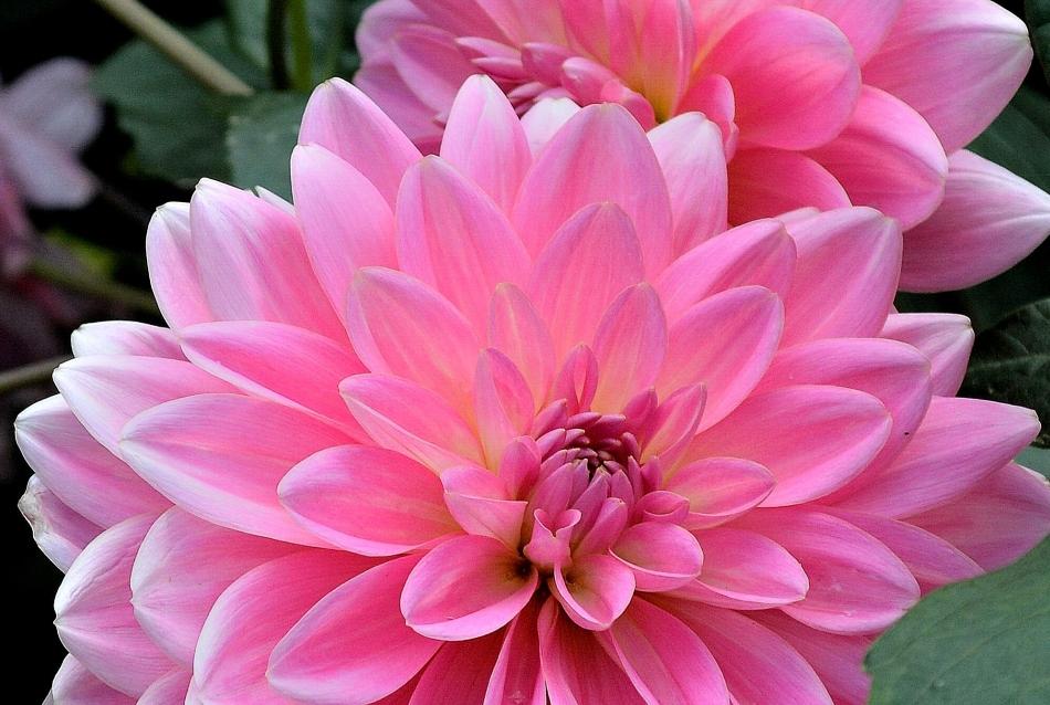 Horniman Flowers 15