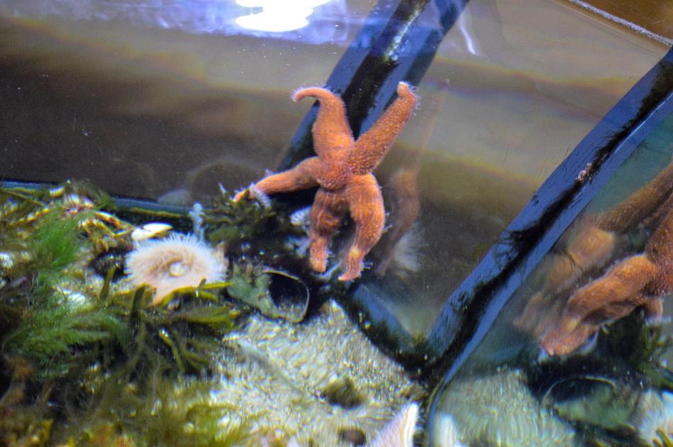 Horniman Aquarium 1