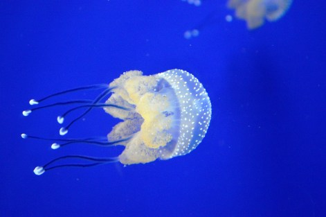 Horniman Aquarium 2