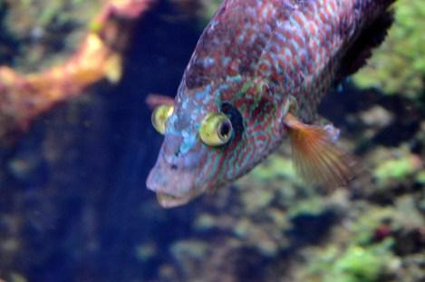 Horniman Aquarium 3