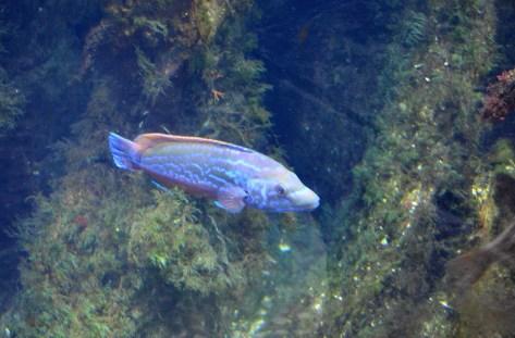 Horniman Aquarium 4