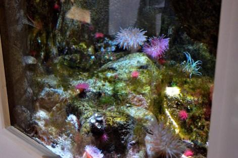 Horniman Aquarium 6