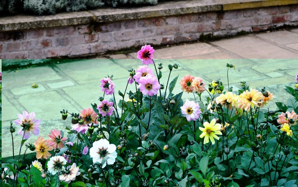 Horniman Gardens 22