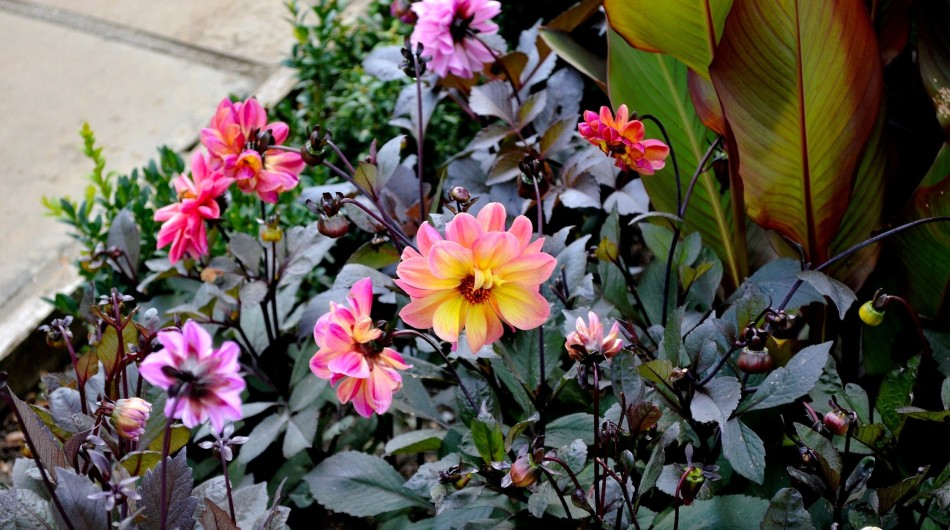 Horniman Gardens 23