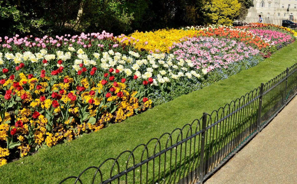 St James park Flowers
