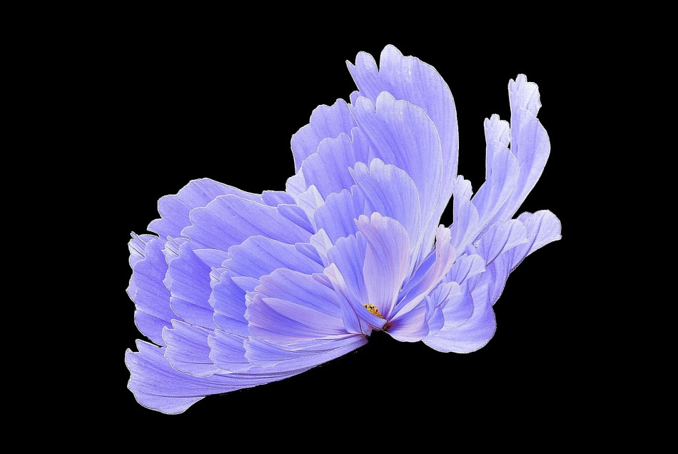 Flora Fusion 2