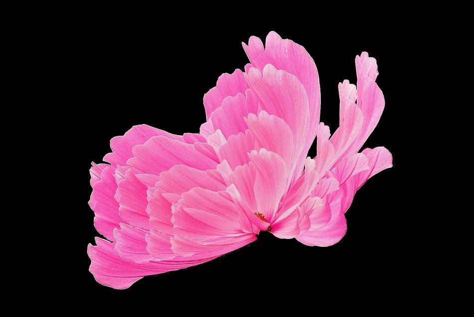 Flora Fusion 3