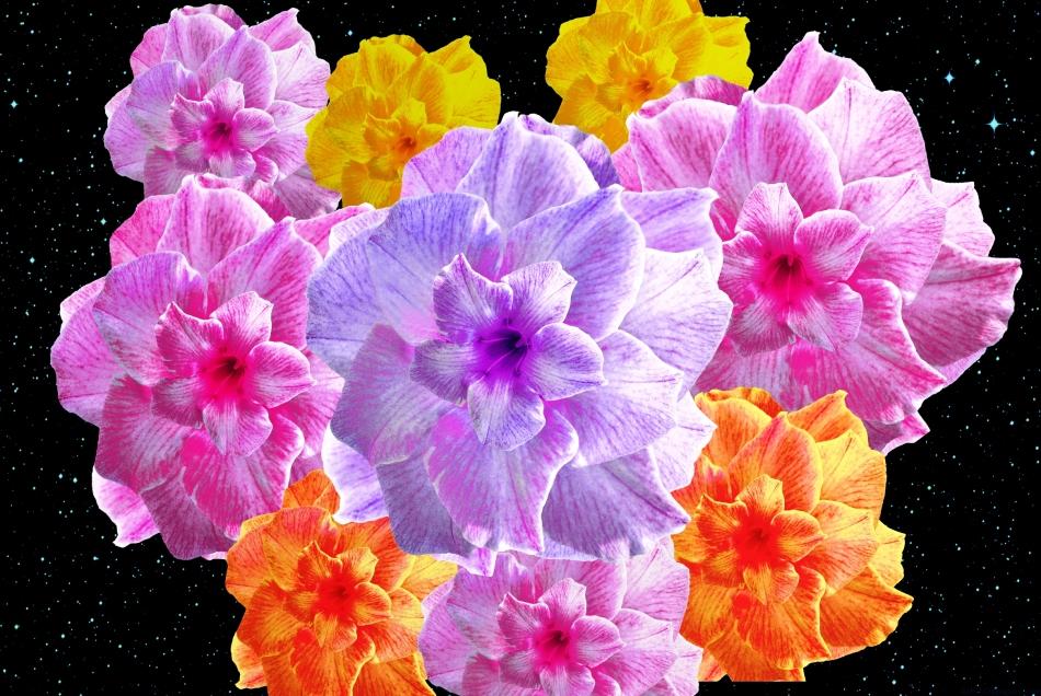 Floral fusion 2e